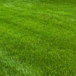 Neatly cut grass — Stock Photo #4772902