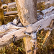 Royalty-Free Stock Photo: Jesus figures lying on an old cross