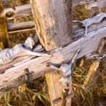 Jesus figures lying on an old cross — Stock Photo