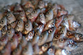 Fish heads on paper — Stock Photo