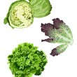 Stock Vector: Lettuce