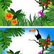 Toucan - Stock Vector