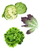 Lettuce — Stock Vector