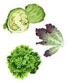 Lettuce — Stock Vector