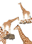 Giraffe — ストックベクタ