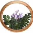 Flowers and leaves in a round wooden framework — Stock Photo