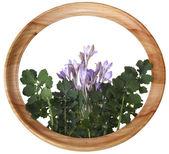 Bloemen en bladeren in een ronde houten kader — Stockfoto