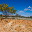 Stock Photo: Australian landscape
