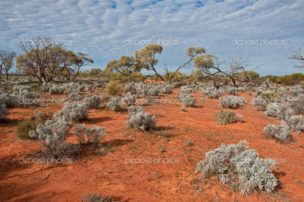 The australian landscape, south australia  Stock Photo #4918690