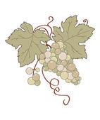 Vector stylized retro grape vine. — Stock Vector