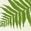 Stock Vector: Single fern frond. isolate object