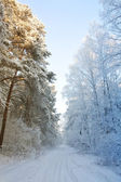 Winter snow forest - the beginning of spring — Stockfoto