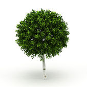 Decorative tree isolated — Stock Photo