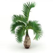 Wild bich palm isolated — Stock Photo