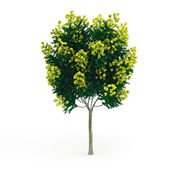 Decorative tree with yellow flowers — Stock Photo