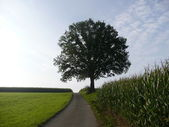 Einsamer Baum — Stock Photo
