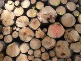 Holzstämme — Stockfoto