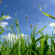 Green grass — Stock Photo #5080070