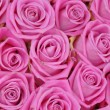 Pink roses — Stock Photo #5131442