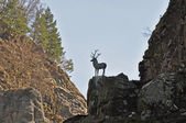 Dear's jump point in German Black Forest — Stock Photo