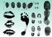 Fingerprints footprints and lips 2 — Stock Vector