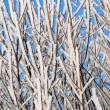 Hoarfrost — Stock Photo #5144128