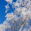 Stock Photo: White frost