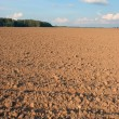 Stock Photo: Arable land area