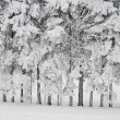 Richly frosted trees — Stock Photo