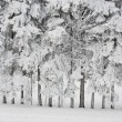 Stock Photo: Richly frosted trees