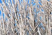霜 — ストック写真