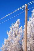 霜の結晶 — ストック写真