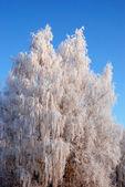 White frost — Stock Photo
