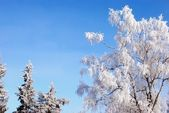Trees covered in rime — Stock Photo