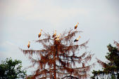 White stroks flocks — Stock Photo