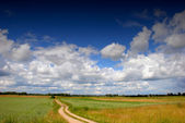 Road through the fields — Stock Photo