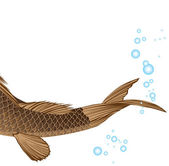 Tail carp — Stock Vector
