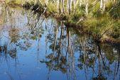 Water reflect — Stock Photo