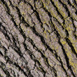 Bark texture — Stock Photo