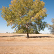 Tree in the field — Stock Photo