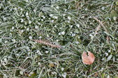 Hoar-frost on grass — 图库照片