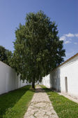 Birch in a court yard — Stock Photo