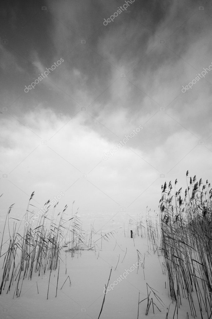Black-and-white landscape  — Stock Photo #4851713