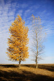Two autumn trees - one with yellow foliage, another without leaves — Stock Photo