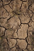 The earth after a drought — Stock Photo