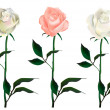 Stock Vector: Three vector roses.