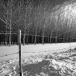 Stock Photo: B&W rural winter scene.