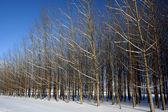 Obstgarten-bäume im winter. — Stockfoto