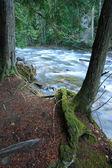 Swift mountain river. — Stock Photo