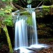 Lush green Fern Falls. - Stock Photo